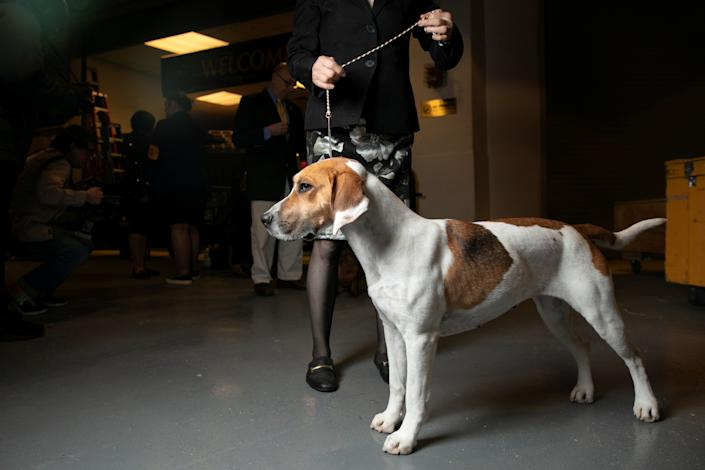 Dogs wait with their handlers in the backstage area of Madison Square Garden at the 143rd Westminster Kennel Club Dog show in New York, Feb. 11, 2019. (Photo: Caitlin Ochs/Reuters)