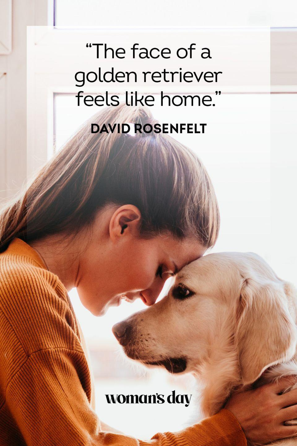 """<p>""""The face of a golden retriever feels like home.""""</p>"""