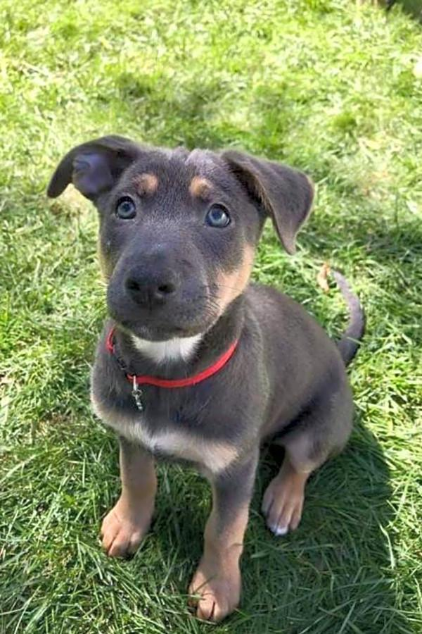These Minneapolis-based puppies are up for adoption and in ...