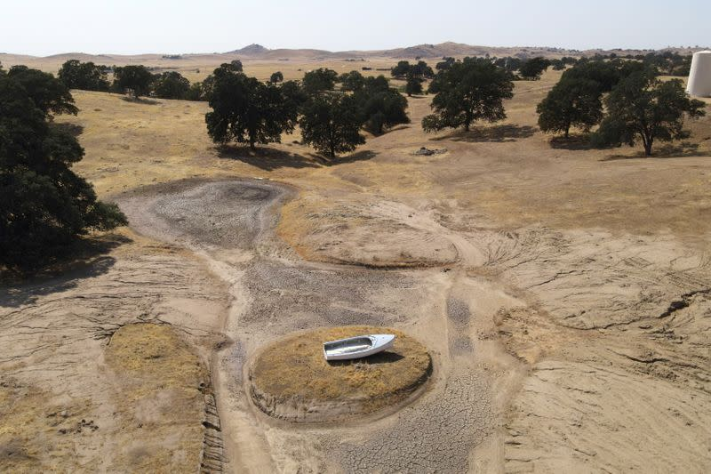 FILE PHOTO: Soaring temperatures and drought continue to affect livestock and water supplies in Madera