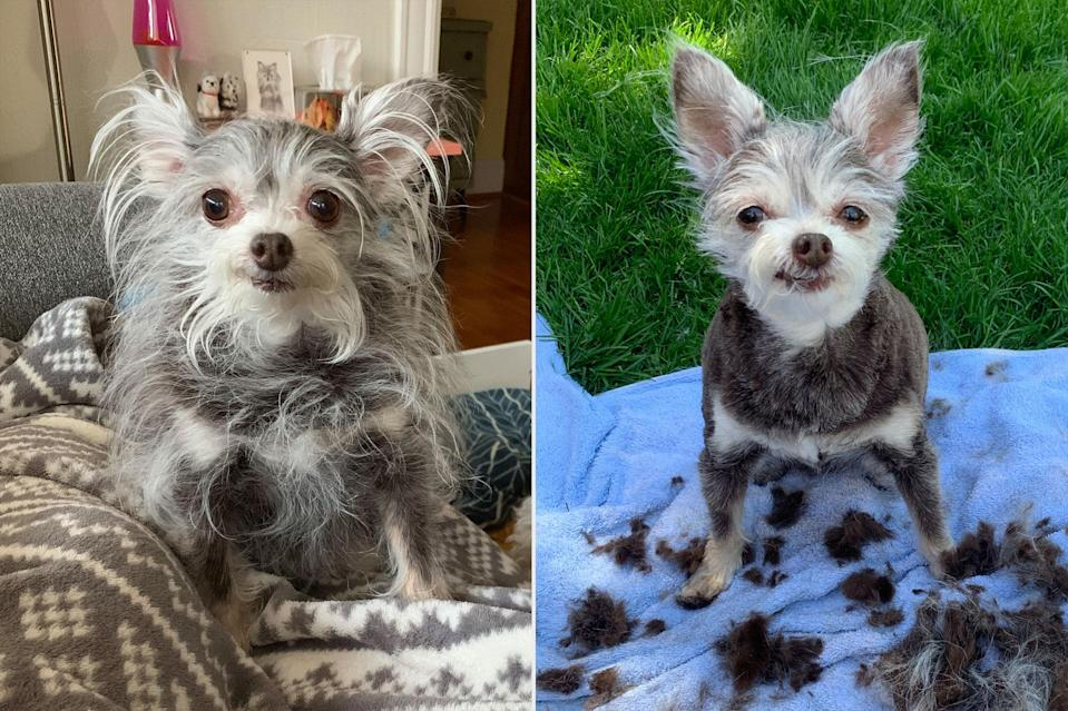 Dog Owners Share Their Wildest Quarantine Grooming ...