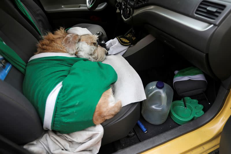 Colonel, a dog using Santa's hat, sleeps in the front seat of the taxi driven by Nicolas Walteros, amid the spread of the coronavirus disease (COVID-19) pandemic in Bogota