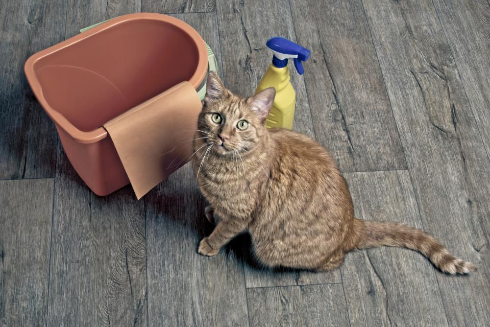 Cute ginger cat sitting beside cleaning equipment andlooking up to the camera.