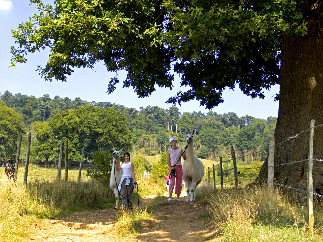 "<p>You don't have to go to South America to meet a llama – the <u><a rel=""nofollow"" href=""http://www.merryharriers.com/"">Merry Harriers</a></u> pub in Hambledon offers llama trekking for a quintessential English break with a difference. Stay on one of the new shepherds huts before heading outside for full immersion in nature. Guides will take you (and your llama) for a walk, ranging from a half-hour stroll to a half-day trip with a picnic included. The llama walks are also suitable for children aged eight and over and cost from £55.20 per adult, £27.60 per child (eight-13). Shepherds Huts cost from £195 per night B&B.<em>[Photo: <u>Getty]</u></em> </p>"