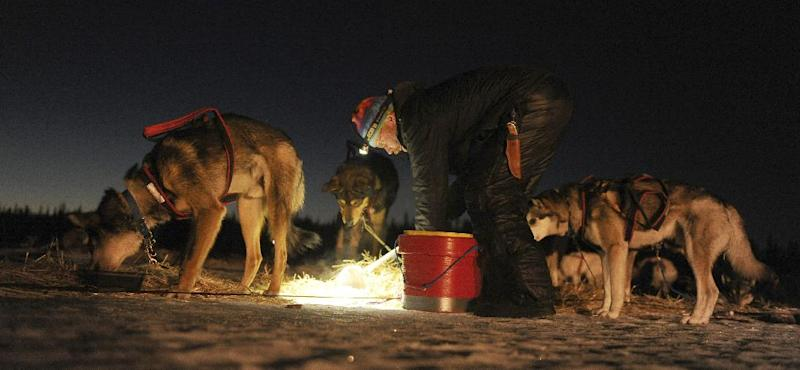 Mitch Seavey feeds his team at the Finger Lake checkpoint during the 2014 Iditarod Trail Sled Dog Race on Monday, March 3, 2014, near Wasilla, Alaska. (AP Photo/The Anchorage Daily News, Bob Hallinen)