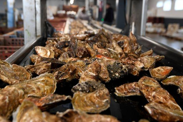 French oyster farmers fume as norovirus shuts down sales