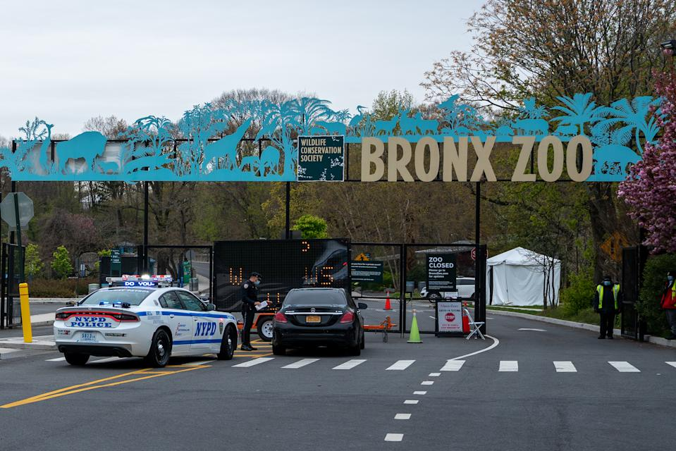 NEW YORK, NY - APRIL 23: A COVID-19 testing site is seen in a parking lot at the Bronx Zoo on April 23, 2020 in New York City. Seven more big cats have reportedly tested positive for the coronavirus (COVID-19) after a tiger tested positive earlier in the month. (Photo by David Dee Delgado/Getty Images)