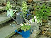 """<div class=""""caption-credit"""">Photo by: Nancy Ondra</div><div class=""""caption-title"""">Wetting Your Plants</div>Don't throw away those leaky or dented watering cans. Use them as-is or remove the handle and widen the opening to make more room for plants."""