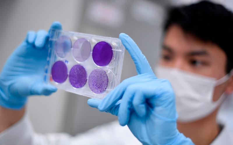 A researcher in Brazil works on virus replication in order to develop a vaccine against the coronavirus - DOUGLAS MAGNO /AFP