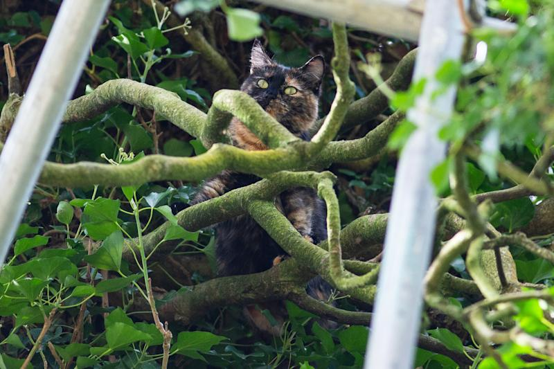 The cat was spotted up the tree on Saturday. (SWNS)