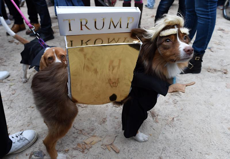 A dog dressed up as Donald Trump attends the 25th Annual Tompkins Square Halloween Dog Parade in New York on Oct. 24, 2015.