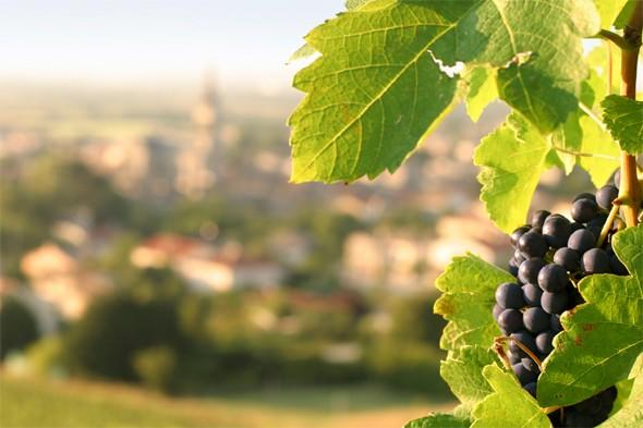 Ten tasty wine holidays