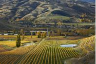 <p>It's hard to pick a favorite season, but it doesn't get more picturesque than this photo of autumn at a vineyard on South Island </p>