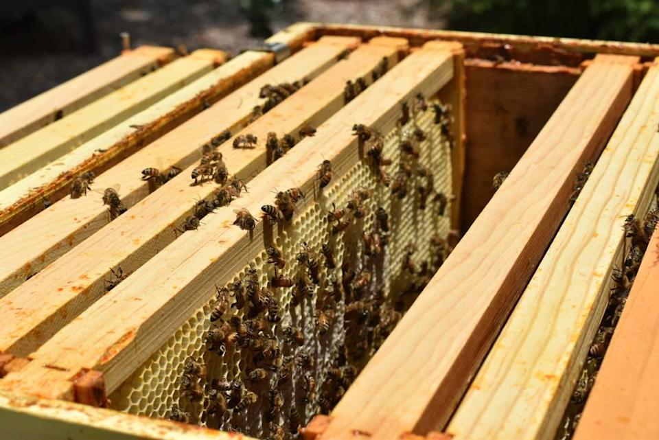 Bees fill one of the Reid family's beehives at their home in Matthews on July 26, 2021.