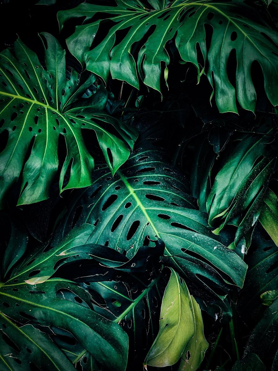"""<p>The Earth always has greenery - it's dependable and consistent, just like a Taurus, which is why it's so fitting that it's this sign's power color. Green is <a href=""""https://www.colorpsychology.org/green/"""" class=""""link rapid-noclick-resp"""" rel=""""nofollow noopener"""" target=""""_blank"""" data-ylk=""""slk:known for growth"""">known for growth</a>, relaxation, connection, tranquility, innocence, and dependability. Wear green when you want to feel grounded.</p>"""