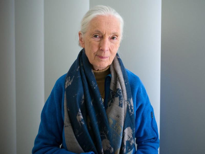 Jane Goodall: AFP/Getty