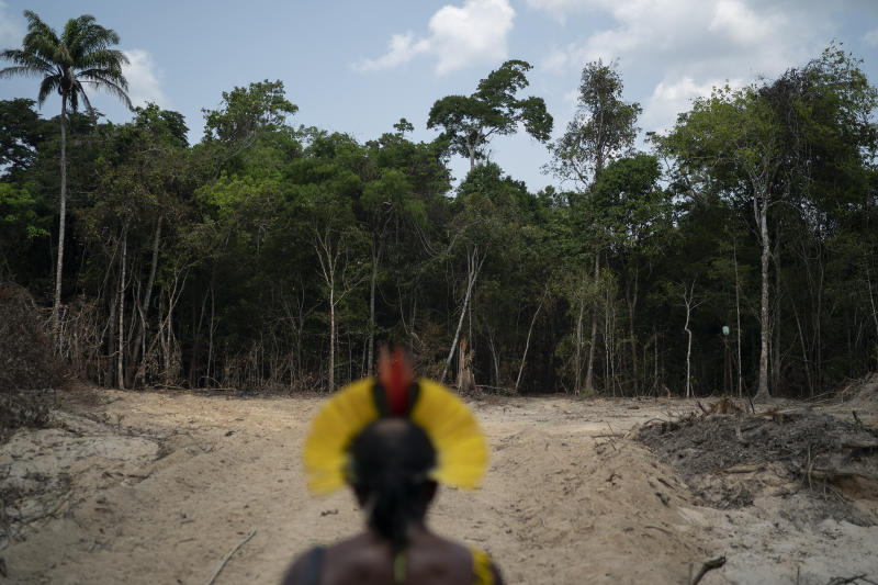 Krimej indigenous Chief Kadjyre Kayapo, of the Kayapo indigenous community, looks out at a path created by loggers on the border between the Biological Reserve Serra do Cachimbo, front, and Menkragnotire indigenous lands, in Altamira, Para state, Brazil, Saturday, Aug. 31, 2019. Much of the deforestation in the Brazilian Amazon is done illegally -- land grabbers burn areas to clear land for agriculture and loggers encroach on national forests and indigenous reserves, and Kayapo says he does not want loggers and prospectors on his land. (AP Photo/Leo Correa)