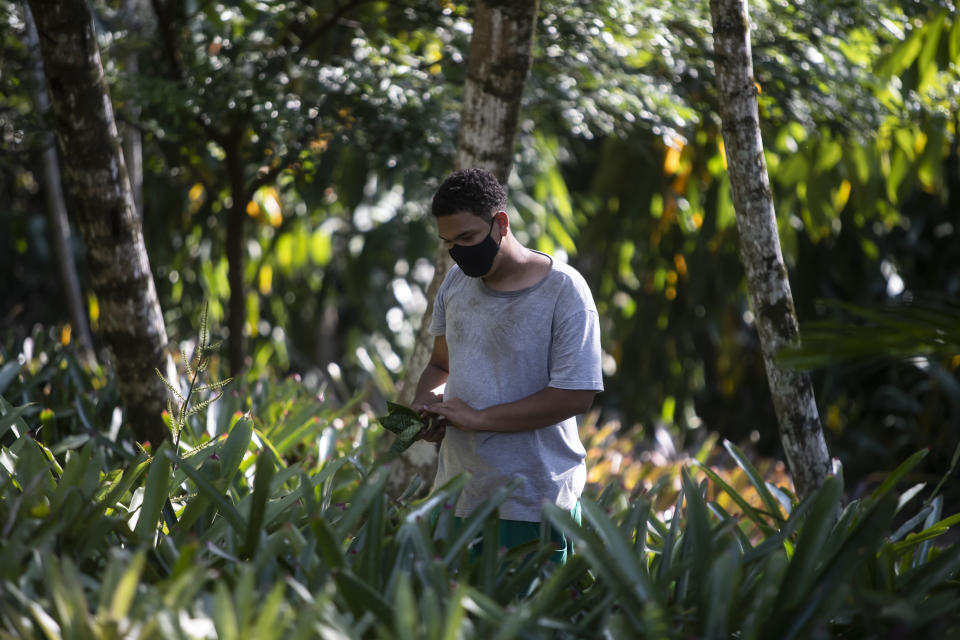 A gardening assistant collects a plant in the garden of Roberto Burle Marx's former home, which was elected today as a World Heritage Site by the United Nations Educational, Scientific and Cultural Organization, UNESCO, in Rio de Janeiro, Brazil, Tuesday, July 27, 2021. The site features more than 3,500 species of plants native to Rio and is considered a laboratory for botanical and landscape experimentation. (AP Photo/Bruna Prado)