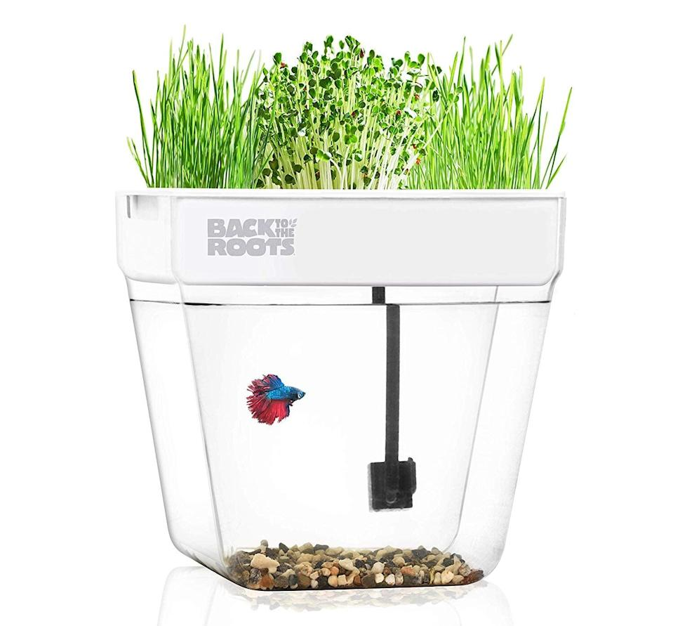 <p>How genius is this? Water your plants in the <span>Back to the Roots Water Garden Aquarium</span> ($82), and then use that excess water for your fish!</p>
