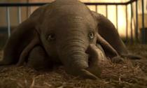 <p>This live-action remake tells the story of a young elephant who can fly and the humans who want to reunite him with his mother. </p>