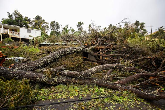 <p>An uprooted tree covers a small wooden and iron house in the village of Viard – Petit Bourg, near Pointe-a-Pitre, on Sept. 19, 2017 in the French territory of Guadeloupe after the passage of Hurricane Maria. (Photo: Cedrick Isham Calvados/AFP/Getty Images) </p>
