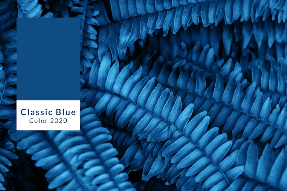 Background of blue fern leaves. Color of the year concept.