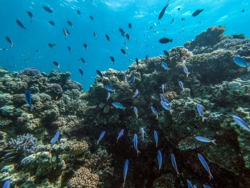 The dazzling turquoise waters and coral reefs off Egypt's Red Sea coast attract scuba divers, but plastic trash and global warming threaten the fragile marine ecosystem