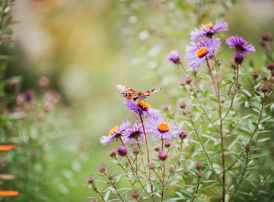 Garden trends: butterfly in wild garden