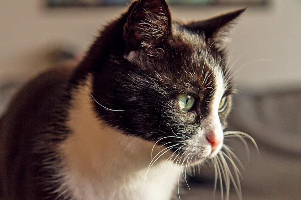 Man Reunited With Cat He Thought Was Dead