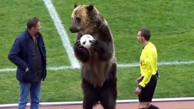 The bear handed the ball to the ref. Image: YouTube
