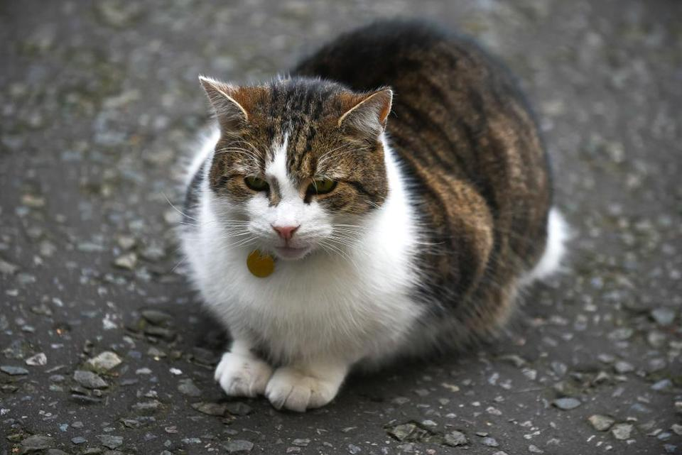 Sydney's Randwick Council plans to ban cats going outside.
