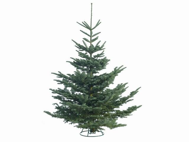 <p>This noble fir is perfect if you're looking for a real tree</p>Waitrose
