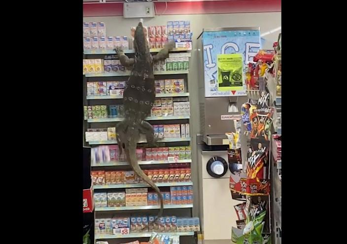 <p>Video of giant lizard terrorising store in Thailand goes viral</p> (Facebook)