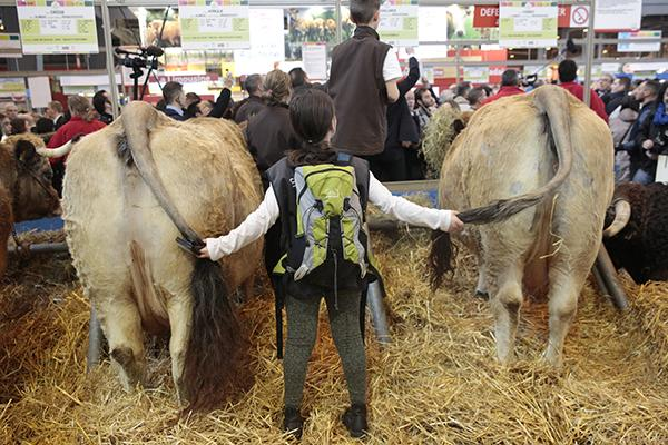 A young girl touches cows at the Agriculture Fair in Paris on February 27, 2017.