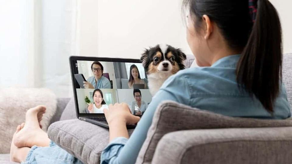 Worker on sofa and team on laptop screen talking and discussion in video conference and dog interruption.