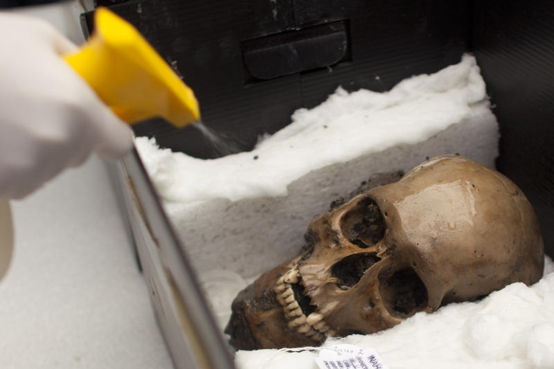 An archeologist sprays water on a skull recently discovered at the archaeological site Templo Mayor in Mexico City, Friday, Oct. 5, 2012. Mexican archaeologists say they have found the largest amount of skulls at the most sacred temple of the Aztec empire. Five of the 50 skulls that were found, including this scull, were buried under a sacrificial stone and have holes on both sides of the head, evidence they were hung on a skull rack. (AP Photo/Alexandre Meneghini)