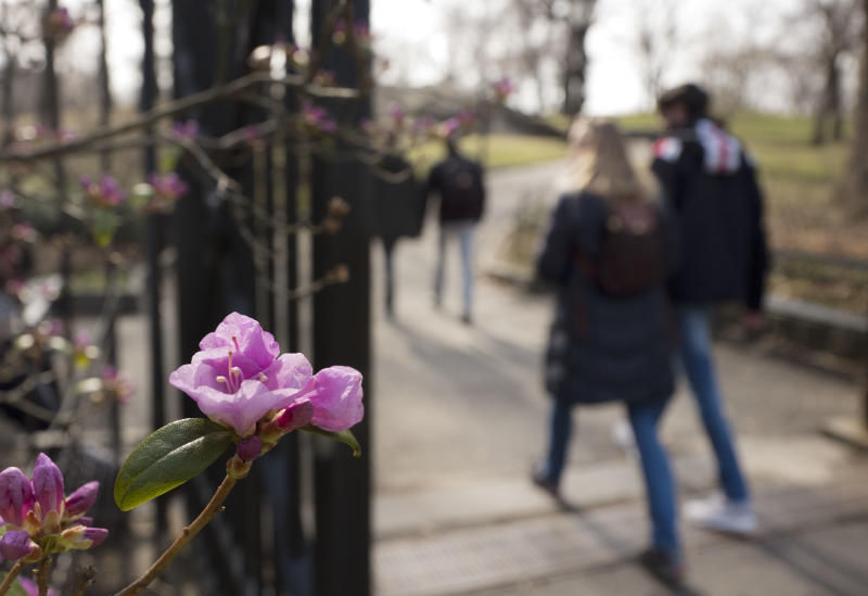 Visitors to Central Park's Conservatory Garden pass a flowering rhododendron, Tuesday, Feb. 28, 2017, in New York. Crocuses, cherry trees, magnolia trees are blooming several weeks early because of an unusually warm February. Some climate experts say it looks like, because of an assist from global warming, spring has sprung what may be record early this year in about half the nation. (AP Photo/Mark Lennihan)