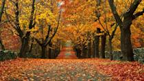 """<p><strong>Where to go:</strong> The manicured fruit trees and bushes in <a href=""""http://www.riparks.com/Locations/LocationColt.html"""" rel=""""nofollow noopener"""" target=""""_blank"""" data-ylk=""""slk:Colt State Park"""" class=""""link rapid-noclick-resp"""">Colt State Park</a> in Bristol offer stunning photo-ops when they turn a vibrant orange. The park also borders the Narragansett Bay, so you'll see the marshy shoreline turn a brilliant gold. </p><p><strong>When to go:</strong> Late October </p><p><a class=""""link rapid-noclick-resp"""" href=""""https://go.redirectingat.com?id=74968X1596630&url=https%3A%2F%2Fwww.tripadvisor.com%2FHotels-g54063-Bristol_Rhode_Island-Hotels.html&sref=https%3A%2F%2Fwww.redbookmag.com%2Flife%2Fg34045856%2Ffall-colors%2F"""" rel=""""nofollow noopener"""" target=""""_blank"""" data-ylk=""""slk:FIND A HOTEL"""">FIND A HOTEL</a></p>"""