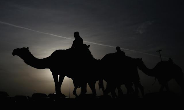 DUBAI, UNITED ARAB EMIRATES - APRIL 16: Racing camels and their handlers arrives early morning prior to the start of the Al Marmoom Heritage Festival at the Al Marmoom Camel Racetrack on April 16, 2014 in Dubai, United Arab Emirates. The festival promotes the traditional sport of camel racing within the region. (Photo by Francois Nel/Getty Images)