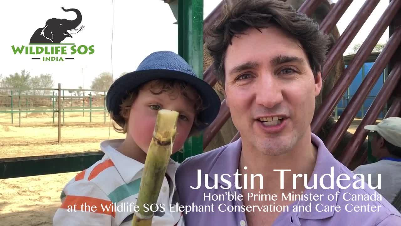Canadian Prime Minister Justin Trudeau on Sunday visited an Indian wildlife sanctuary with his family.  Trudeau was joined by his wife and their three children aged 2, 9 and 10 at the Wildlife SOS Elephant Conservation and Care Centre in Mathura.  They enjoyed feeding the elephants and learning about each of the animals, all of whom have been given a second chance at life free from abuse and cruelty.  Wildlife SOS runs a bear rescue centre in Agra and an elephant rescue centre in Mathura.  The Wildlife SOS Elephant Conservation and Care Centre (ECCC) was established in 2010 in Mathura and provides critical medical treatment and lifetime care to 24 rescued elephants.  Trudeau and his Indian counterpart Narendra Modi will hold talks on civil nuclear cooperation, space, defence, energy and education.