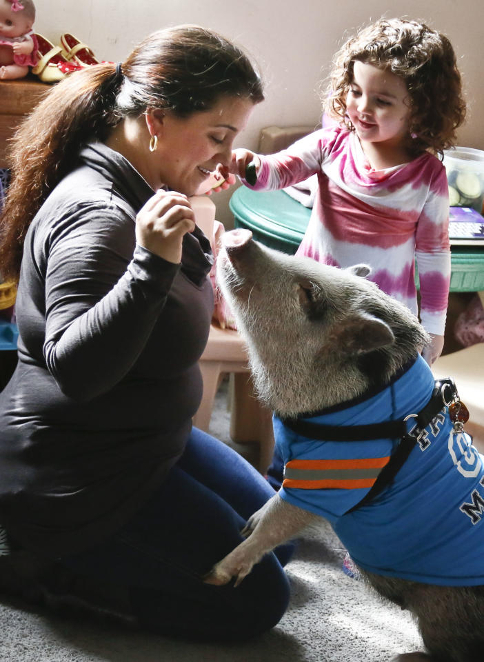 Danielle Forgione, left, and her daughter Olivia, 3, play with Petey, the family's pet pig, on Thursday, March 21, 2013, in the Queens borough of New York. Forgione is scrambling to sell her second-floor apartment after a neighbor complained about 1-year-old Petey the pig to the co-op board. In November and December she was issued city animal violations and in January was told by both the city and her management office that she needed to get rid of the pig. (AP Photo/Bebeto Matthews)