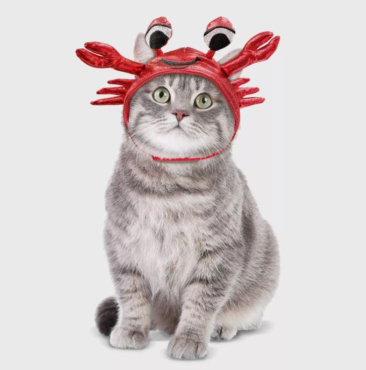 "Get this <a href=""https://goto.target.com/eDvPZ"" target=""_blank"" rel=""noopener noreferrer"">Crab Hat Cat Costume for $6</a> at Target. It's one-size-fits-all and has a Velcro strap."