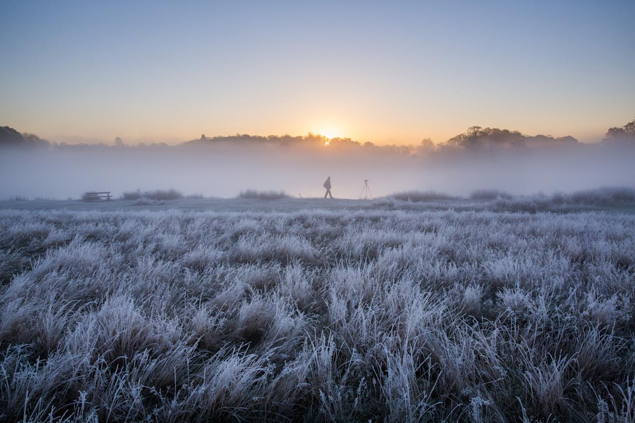 <p>Richmond Park looking like something out of a particularly romantic music video [SWNS] </p>