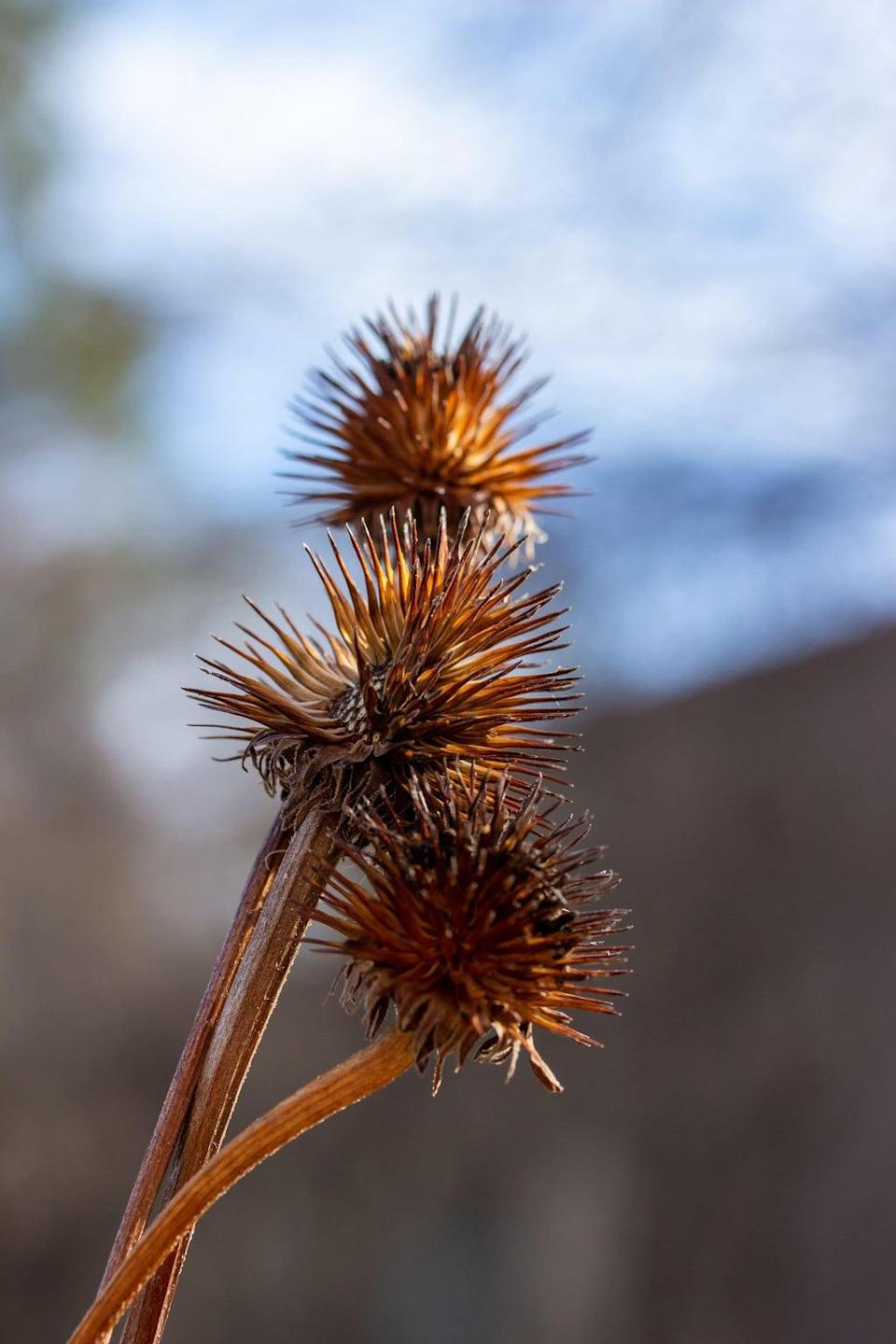 Leave seedheads through the winter (Alamy/PA)
