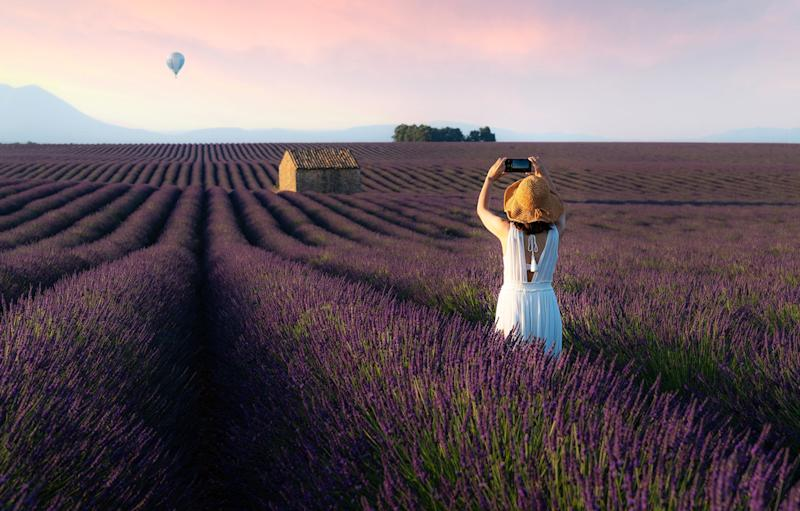 Lavender fields are a Instagram favourite - Getty