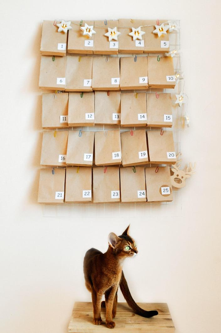 The Abyssinian cat is waiting for the advent calendar for Christmas. Mood Board with gifts and star garland