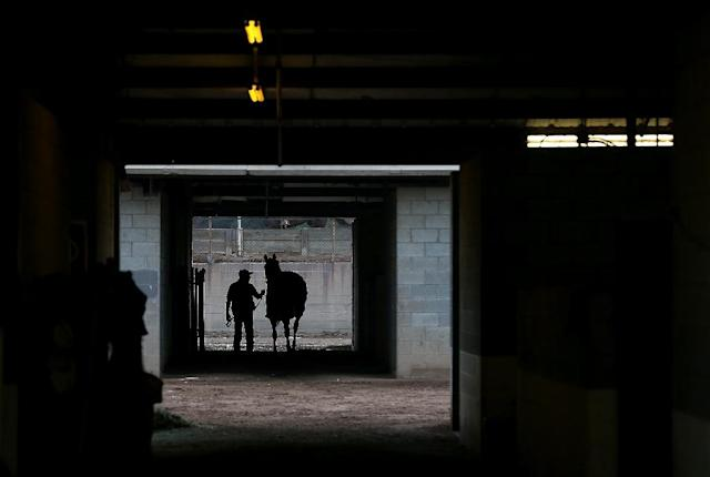 There are currently 7,377 registered racing grooms in Britain and nearly one in four of those comes from outside the UK (AFP Photo/JUSTIN SULLIVAN)