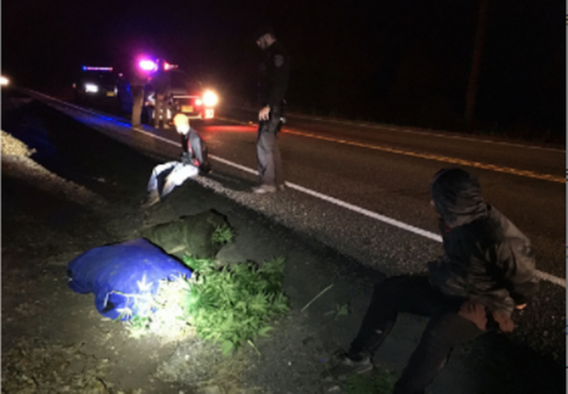 Thieves trying to take marijuana end up with bags full of hemp, Oregon cops say