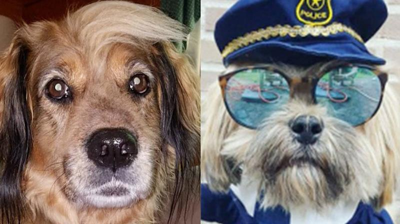 Jimmy Fallon's Halloween Dogs Round-Up Is Too Cute For Words