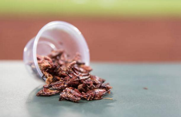 The Mariners toasted grasshoppers were an immediate hit when they debuted at Safeco Field last season. Even opposing teams like the Astros are on the bandwagon now. (Getty Images)